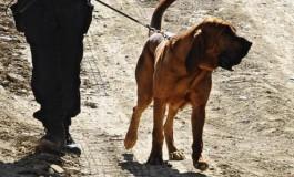 Sedicenne scomparso da casa a Scandicci. Ritrovato dai Carabinieri nel centro di Taranto