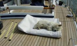 Scuola per insegnare ai cani  come stare a bordo di uno Yacht