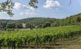 Una nuova associazione dei produttori di Gaiole in Chianti per promuovere la promozione vitivinicola e il territorio