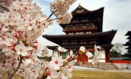Una finestra sul Giappone: al via il corso interculturale