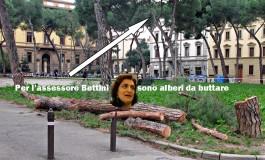 I pini di piazza della Vittoria sul tavolo del Ministro della cultura. Dubbi sull'iter per l'abbattimento dei pini