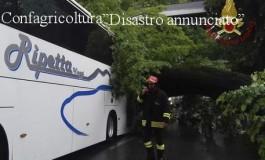 Tagliati gli alberi sani (Stazione, Statuto, Morgagni), restano quelli malati che cascano su autobus in marcia