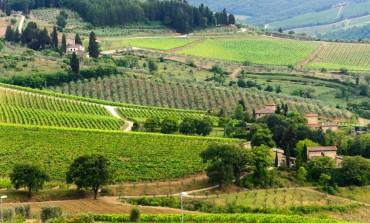 """Vendemmia 2018, Consorzio Vino Chianti: """"Soddisfatti della qualità, meno della quantità: pesa la presenza degli ungulati"""""""