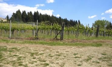 Alla scoperta dei vini di Terre del Bruno e del territorio storico di Pogni