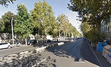 """Amato: """"Inaccettabile tagliare alberi sani nei viali e nel viale Matteotti"""""""