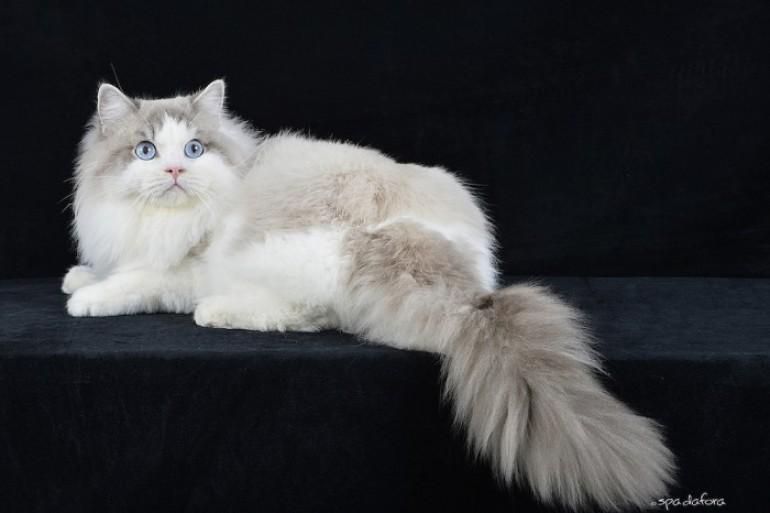 Gatti da copertina: ad Arezzo arrivano gli esemplari più belli