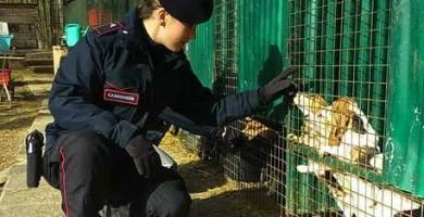 Allevamento con 226 cani Beagle e Bulldog detenuti abusivamente nel Mugello