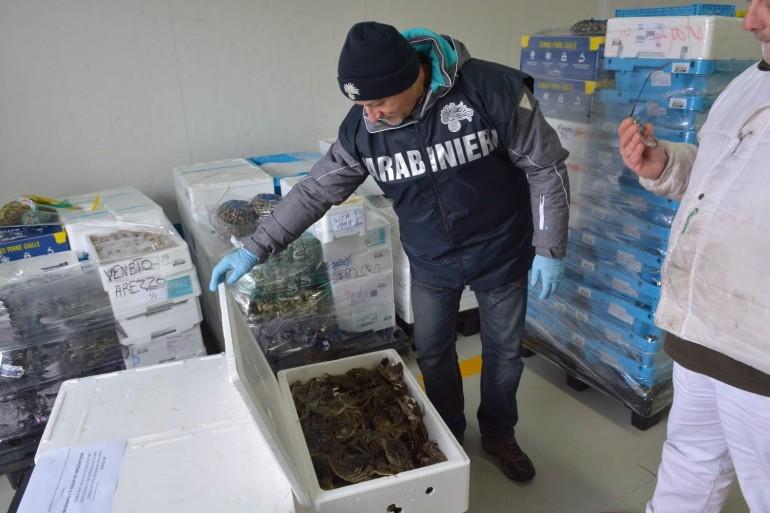 Sequestrati in un furgone con targa olandese da CC forestali e Nas 500 kg di prodotti ittici